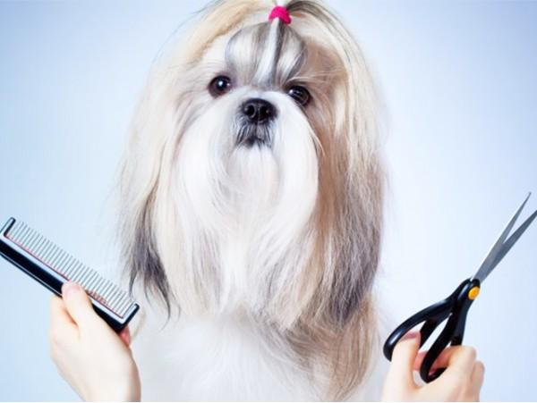 Sesión de peluquería canina con lavado y corte