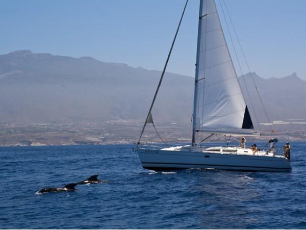 Paseo en velero de lujo con comida, barra libre y avistamiento de cetáceos