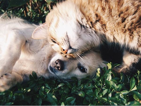 Curso Formativo: Nutrición y Dietética para perros y gatos