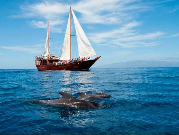 Excursión de 5h en velero oriental con avistamiento de cetáceos + comida + bebidas